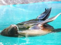 Sea Lion Training Demo