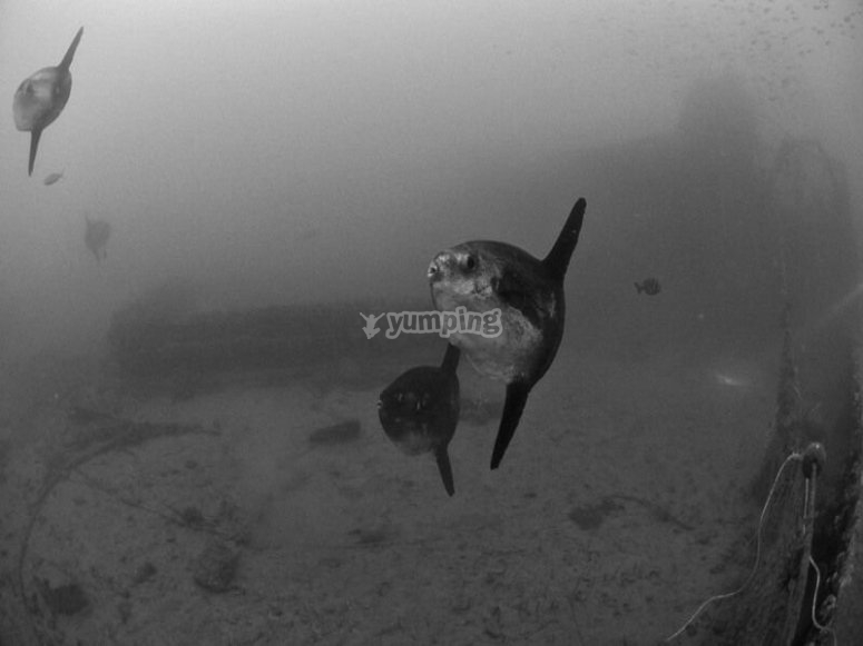 Scuba dive with them!