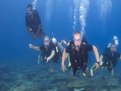 Downbelow Marine & Wildlife Adventures