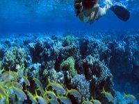 Snorkeling & Skin Diving in Tunku Abdul Rahman Park Kota Kinabalu