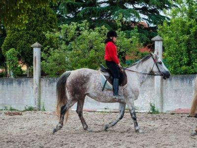 Horse riding lessons in Sesamo 2h