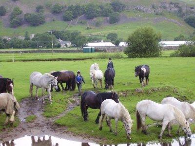 Kilnsey Trekking & Riding Centre
