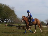 Dressage with Boltby Pony Trekking & Trail Riding Centre