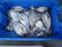Catch fish in West Sussex.