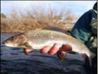 Winter Grayling fishing.