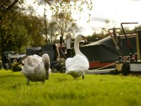 Enjoy nature and the countryside on a narrowboat