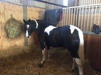 Meet everyone in Albourne Equestrian Centre!