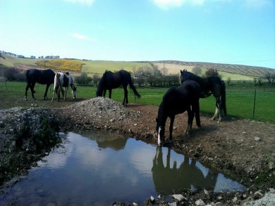 Bitless Bridle Equestrian Centre