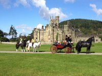 carriage ride with Cimla Equestrian Holiday Centre