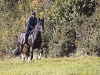Open Hacking with Marros Riding Centre