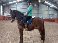 Dressage at Pathhead Equestrian Centre