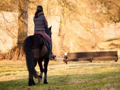 Shardeloes Farm & Equestrian Centre