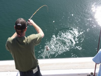 Sea Fishing 4 U