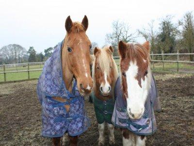 Brawlings Farm Riding Centre