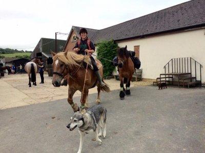 Hampsley Hollow Riding Centre