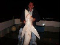 Sharking 2009