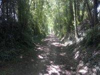 Shady trails