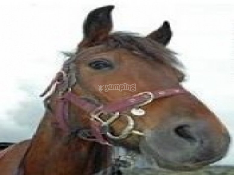 One of our horses