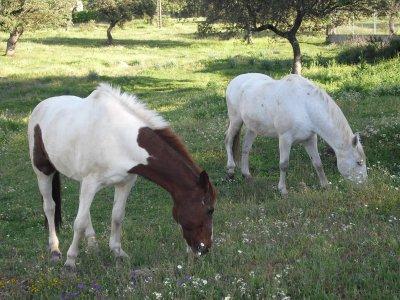 Horseback route through Casar de Cáceres 2h 30 m