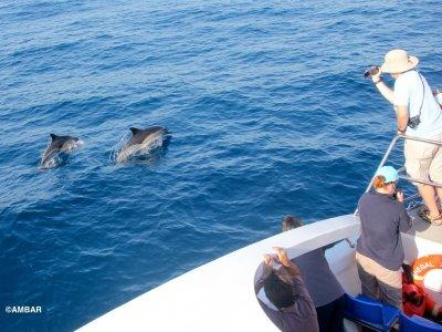 Hegaluze Paseos en Barco