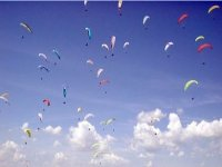 Oodles of paragliders