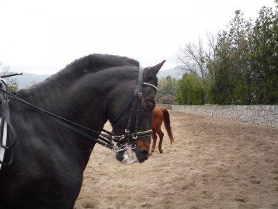 Horseback tour, El Escorial, 1 hour