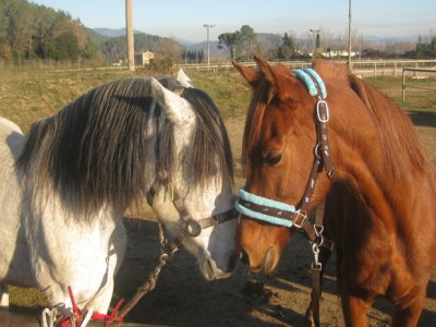 Lesson + Horse Ride for beginners - 1h