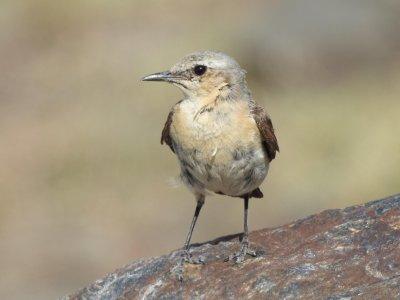 Centro de Visitantes El Dornajo Ornitología