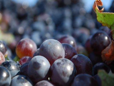 Wine cellar visit in Cofrentes Valley
