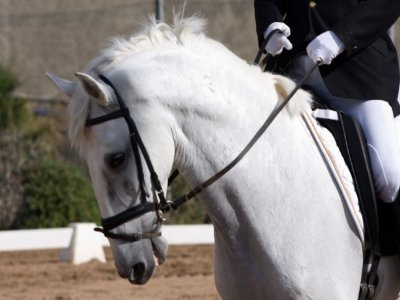 8h horseriding lessons in Siero