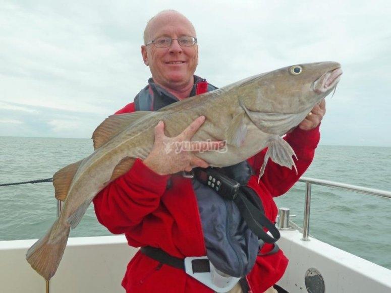 A large 27lb Cod
