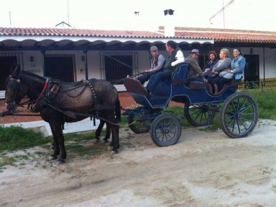 Visit El Rocío on a mule drawn carriage, adults