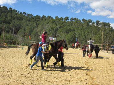 4 horse riding lessons for beginners
