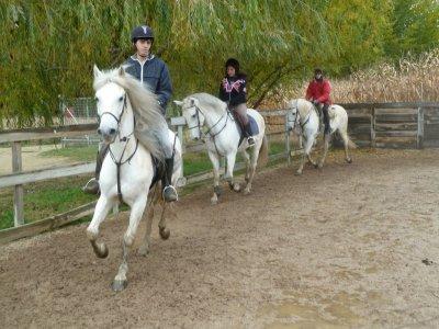 4 horse riding class pass 30min Christmas gift