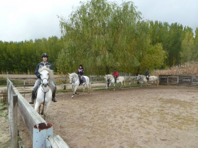10 horse ride lessons pass for 1hour