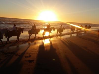 Sunset Horse Riding in Costa de la Luz, 2h