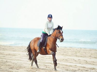 Felyn Forest Riding Centre