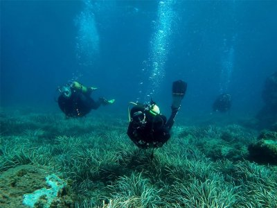 Double Dive Immersion in Tabarca Island, 5-Hours