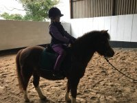 Lessons for novices in The Horse Activity Centre.