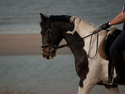 Horse ride trough Miengo coast, 1 hour.
