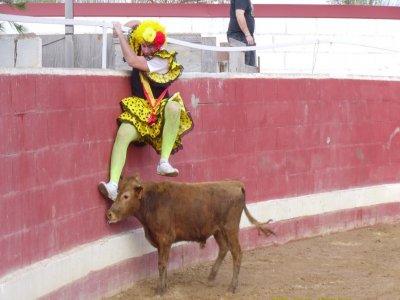 Half day bullfight offer in Alcalá del Júcar