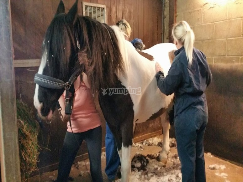 Docklands Equestrian Centre Horse Riding