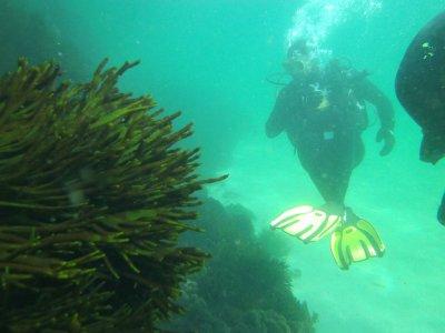 PADI Open Water Diver in Sanxenxo, Pontevedra