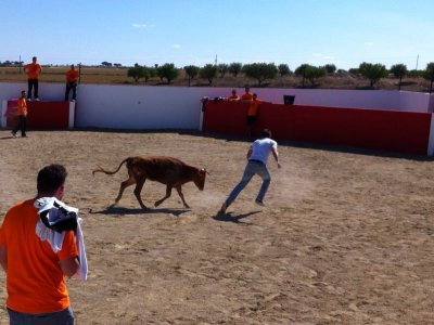 Heifer-fighting + Meal in Alcalá del Júcar