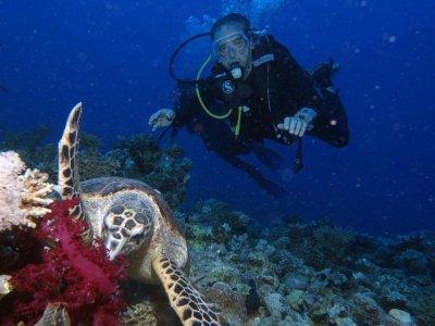 Scuba Diver course in Madrid + 2 sea immersions