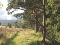 Hiking Pennine Way