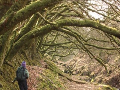 Yenworthy Lodge Hiking