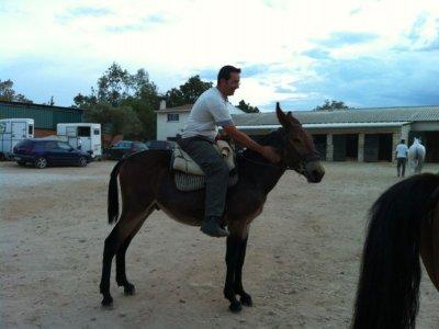 4h Horse Riding Voucher in El Escorial