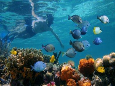 Diving immersion in the Bahía de Xarraca, 2 hours