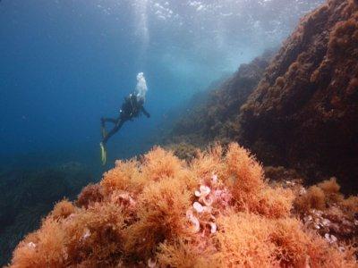 Diving immersion in Murada Island, Ibiza 2h